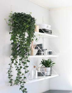 English Ivy Plant, English Ivy Indoor, Easy House Plants, Diy Hanging Shelves, Wall Shelves, Plants On Shelves, Storage Shelving, Shelving Units, Corner Shelves