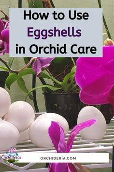 Orchids In Water, Indoor Orchids, Orchids Garden, Garden Plants, Herb Garden, Potted Plants, Orchid Plant Care, Orchid Plants, Indoor Orchid Care
