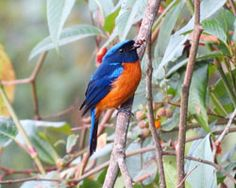 You can see this type of birds in West Bengal.