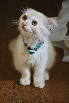 Pretty cat :3