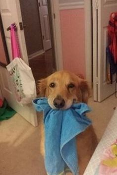 They can be very helpful. | 32 Reasons Every Day Should Be National Dog Day