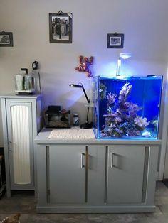 Nano Reef Tank, Reef Tanks, Fish Tanks, Nano Aquarium, Aquarium Design, Reef Aquarium, Moss Terrarium, Saltwater Tank, Seahorses