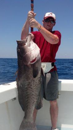 Fishing Charters in Destin Florida . Backlash Charters Destin Florida. http://GoForFish.com