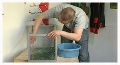 akvaarion pesu (copyright YLE/videokuvaa)