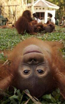SELFIE ( nothing orang / wrong with taking that !! ) This is the rarest of things, = a beautiful ginger