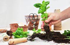 HVAD ER URBAN GARDENING? Urban Gardening, Grow Your Own, Plant Hanger, Vegetables, Food, Decor, Plant, Veggie Food, Decorating