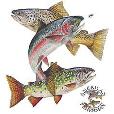 Stream Trout Trout Fishing, Fly Fishing, Outdoor Logos, Rainbow Trout, Fish Art, Carving, Art Work, Salmon, Pictures