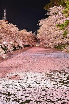 Lago abaixo do castelo de Hirosaki.