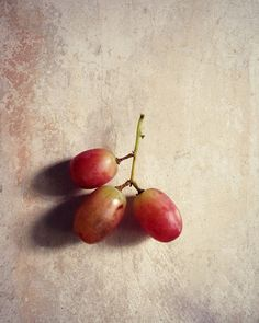 Food Photography Grapes Still Life Fruit by VictoriaEnglishCharm, $25.00