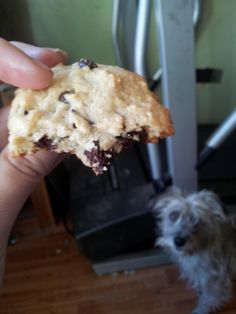Low Carb Chocolate chip cookies, recipe in comments. - Imgur