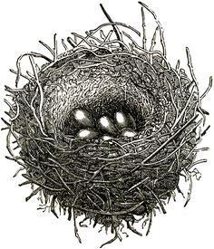 Public Domain Bird Nest Image Graphics Fairy
