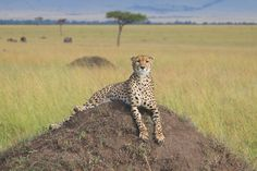 All You Need to Know About the Masai Mara National Reserve
