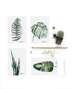 Mini art prints / Postcard set 'Botanics' printed on white 350 g.The graphics can be used as a postcard or a small artwork to frame. Paper size mm) SHIPPINGThe mini art prints come in a set of three, in a cardboard box. Botanical Illustration, Botanical Prints, Illustration Art, Illustrations, Botanical Posters, Impressions Botaniques, Watercolor Postcard, Turbulence Deco, Deco Nature