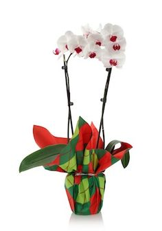 Holiday-Care-Kit-Orchid.jpeg
