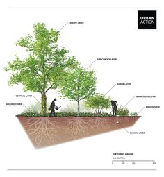 Permaculture forest garden design by URBAN ACTION #permaculture #urbanaction