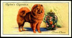 """Ogden's Cigarettes """"Dogs"""" (series of 50 issued in Chow-Chow Dog Artwork, Birds Of America, Vintage Dog, New York Public Library, Old Postcards, Animals Of The World, Dog Quotes, Chow Chow, Natural History"""