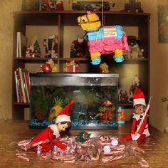 The Elf on the Shelf - Pinata fun! Awesome Elf On The Shelf Ideas, Der Elf, Elf Auf Dem Regal, Elf On The Self, Elf Magic, Naughty Elf, Holiday Fun, Holiday Decor, Buddy The Elf