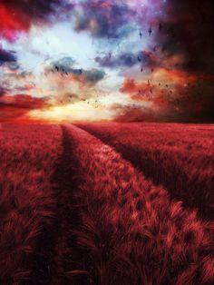 Strawberry Fields Forever by =Phatpuppyart
