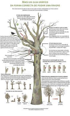 Em Defesa das Árvores: A Poda - Lição nº 1 Tree Pruning, Welcome To The Jungle, Cactus, Farm Gardens, Garden Crafts, Survival Skills, Botany, Planting Flowers, Flora