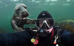 A seal pup grins over the shoulder of photographer Alex Mustard as he takes a self-portrait off the Northumberland coastPicture: Alexander Mustard / Barcroft Media