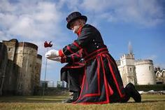 tower of london poppies - Yahoo Image Search Results