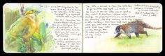Birding journal by artist and naturalist, Catherine Hamilton: http://mydogoscar.com/birdspot/