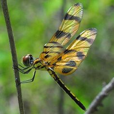 """dragon fly 