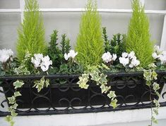 Winter window box - could do this with my little conifer that needs repotting an. - Winter window box – could do this with my little conifer that needs repotting anyway - Winter Planter, Fall Planters, Garden Planters, Terrace Garden, Outdoor Planters, Black Planters, Planter Pots, Winter Container Gardening, Container Plants