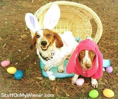 Kody-Lily-easter