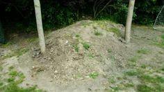 Mutterboden zu verschenken in Schleswig-Holstein - Oldenburg in Holstein | eBay Kleinanzeigen