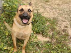 9/6/15 PLEASE ADOPT ME♥♥♥ Gorgeous boy wants his own loving forever home♥♥♥PetHarbor.com: Animal Shelter adopt a pet; dogs, cats, puppies, kittens! Humane Society, SPCA. Lost & Found.