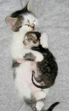 Mom  kitten snuggling  sleeping  Brandon George onto Love Cats