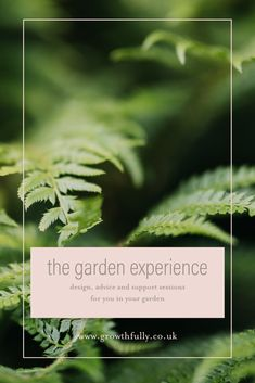 A one-off session in your garden with designer, Sarah Layton, to get you on the right path to creating the garden you want. Gain confidence, wellbeing and know-how. Spring Plants, Spring Flowers, Plant Design, Garden Design, Planting, Gardening, Soil Improvement, Garden Images, How To Gain Confidence