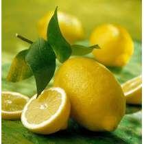 Muda Limão Siciliano Enxertada Início De Produção Excelente.