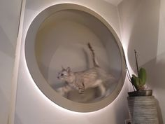 ▶ homemade DIY cat wheel (and also lightobject) - YouTube