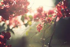 La esencia de la primavera. El renacer, el florecer de los nuevos amores a través de las flores mismas. Esa buena energía que uno siente.