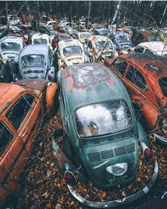 Volkswagen Bug, anyone? Abandoned Houses, Abandoned Places, Abandoned Vehicles, Dude Where's My Car, Vw Bus, Volkswagen Transporter, Junkyard Cars, Vw Vintage, Rusty Cars