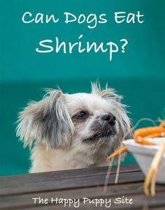 Can dogs eat shrimp - is it safe - find out in this healthy eating guide Fun Facts About Dogs, Dog Facts, Make Dog Food, Best Dog Food, Puppy Feeding Schedule, Raw Feeding For Dogs, Organic Dog Treats, Dog Weight, Dog Diet