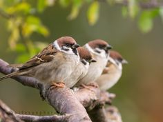 Friends in a row by Carlos Urtasun on 500px
