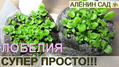 ПОСЕВ ЛОБЕЛИИ СУПЕР ПРОСТОЙ СПОСОБ!!! / Как очень просто посеять лобелию