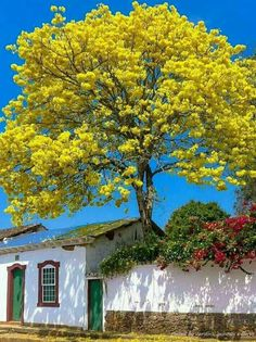 Tree behind the wall