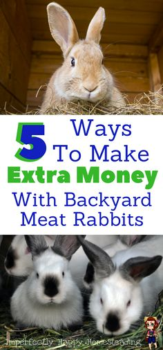 5 Ways To Make Extra Money with Backyard Meat Rabbits on Your Homestead.