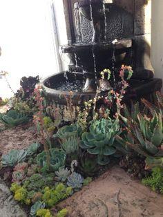 Simply Succulent Plant Designs- Los Angeles, Orange County - Large, Yard Rehab