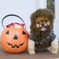 We love our pets! Especially at when we get to see them in See more of our favorite pet costumes in our bio. Animals And Pets, Baby Animals, Funny Animals, Cute Animals, Pet Halloween Costumes, Pet Costumes, Cute Puppies, Cute Dogs, Dogs And Puppies