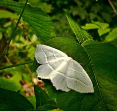 White moth, Clove Lakes Park, Staten Island ©2013 Eric K. Washington