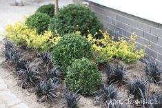 Ogród z lustrem - strona 51 - Forum ogrodnicze - Ogrodowisko