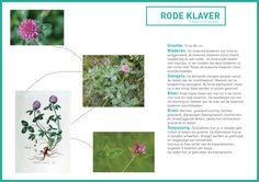 http://s32.postimg.org/i5qkljpg3/rode_klaver_groene_avonturen_tekst.jpg