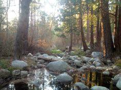 Strawberry Creek: Quiet Creek Inn, Idyllwild