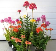 Bromeliads from seed & Unusual plants Orchids Garden, Orchid Plants, Flower Planters, Flower Pots, Exotic Flowers, Beautiful Flowers, Mini Orquideas, Ground Orchids, Orchid Arrangements