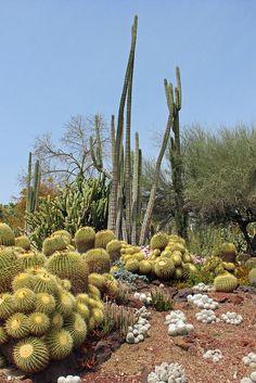Desert Garden (The Huntington Library Garden, CA) by Lizzie927, via Flickr